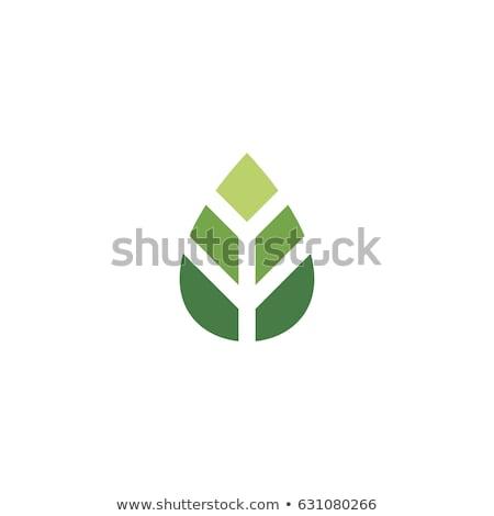 Abstract bloem bladeren icon vector teken Stockfoto © blaskorizov