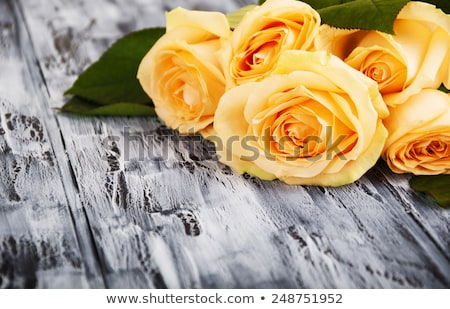 yellow rose on a red wooden background Stock photo © nito