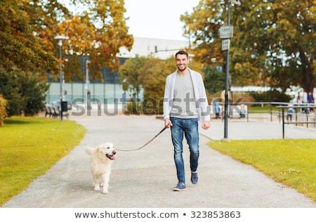 徒歩 · 犬 · かわいい · ビーグル - ストックフォト © monkey_business