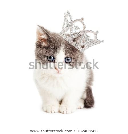 Cute мало котенка сидят белый Сток-фото © vauvau
