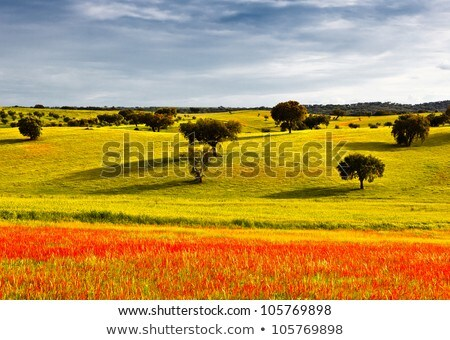 begin · voorjaar · typisch · landschap · Portugal - stockfoto © carpeira10