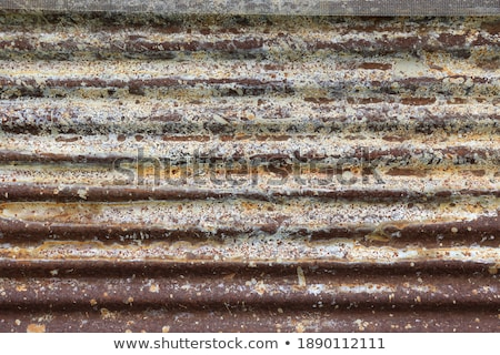 dry tree leaf on a rusty steel sheet stock photo © dutourdumonde
