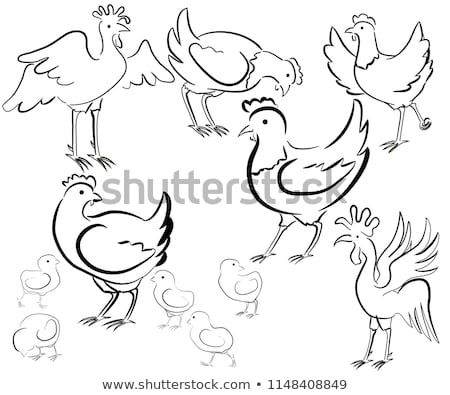 roosters and a hen black and white stock photo © ecelop