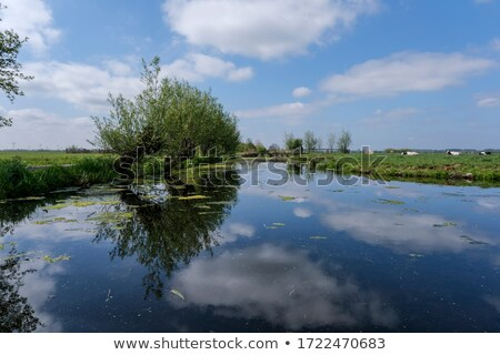 Nature landscape with ditch and trees Stock photo © ivonnewierink