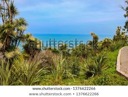 Repolho árvore costa ver praia Sydney Foto stock © dirkr