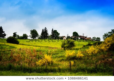 French landscape in the Limousin Stock photo © ivonnewierink