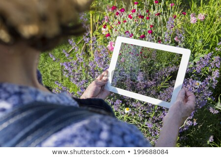 senior woman with tablet pc and flowers at garden Stock photo © dolgachov