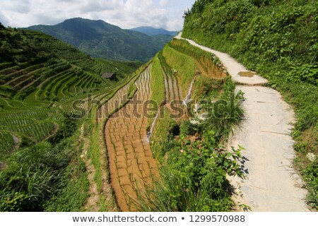 small stone path in longshen rice terraces stock photo © juhku