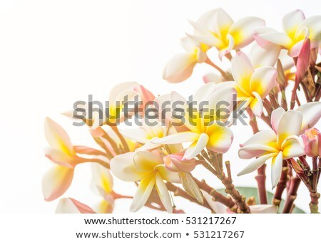 Lan flores brancas árvores água folha Foto stock © stoonn