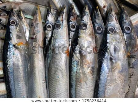 japán · halfajok · hal · forma · kék · színes - stock fotó © seiksoon