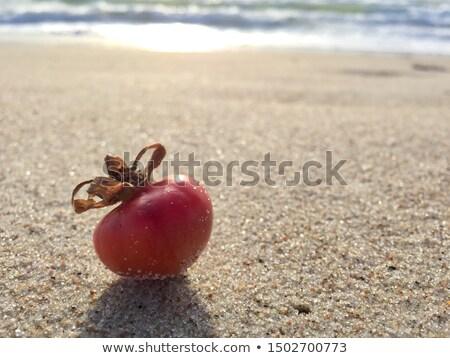 durva · homok · textúra · makró · magvak · természet - stock fotó © alekleks
