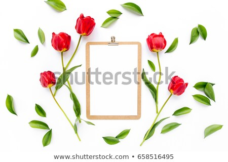 Vermelho tulipas papel primavera grama Foto stock © Zhukow