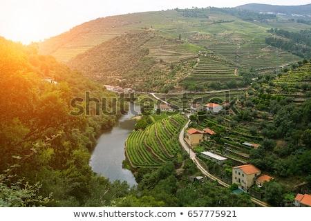 Douro Valley Stock photo © homydesign