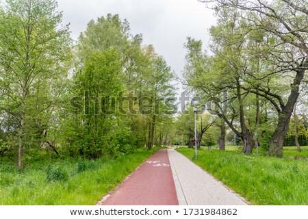 path through the park Stock photo © art9858