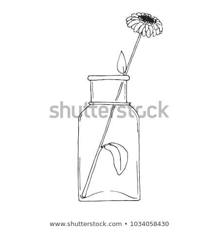 esboço · flor · grande · transparente · jarra · vetor - foto stock © Arkadivna