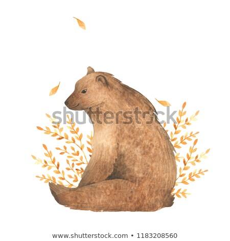 brown bear template frame stock photo © bluering