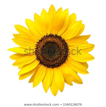 dahlia · zonnebloemen · donkere · Blauw · bloemen · oranje - stockfoto © neirfy
