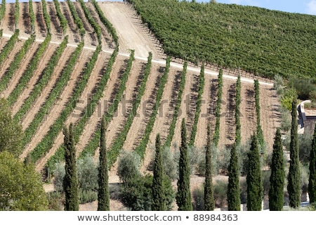 best tuscan vineyards around Montalcino and San Antimo Stock photo © wjarek