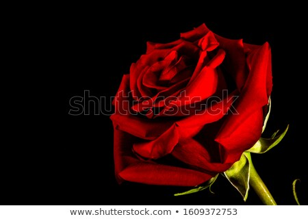 close up of black silk cloth with roses Stock photo © mycola