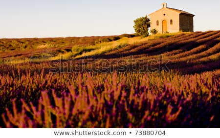 chapel with field, Plateau de Valensole, Provence, France Stock photo © phbcz