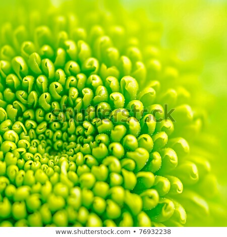 A bright green flower Stock photo © bluering