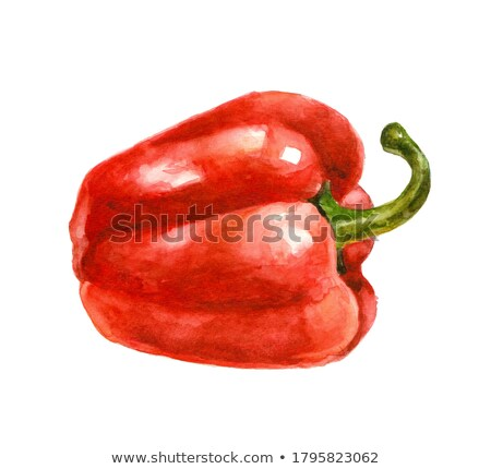 Set of bell pepper. Watercolor painting on white background Stock photo © Natalia_1947