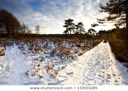 two ways choice in winter stock photo © photocreo