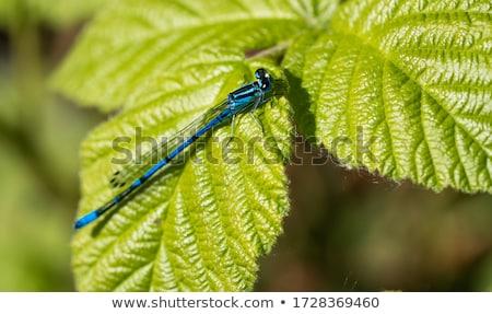 vad · levél · kék · folyó · szín · állat - stock fotó © chris2766