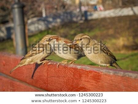 Feminino pardal um em pé ramo pena Foto stock © Elenarts