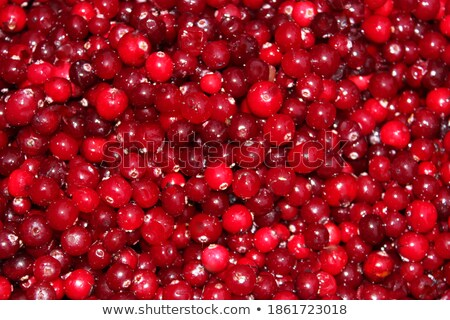 Close-up shot of lingonberry twig with berries Stock photo © Mps197