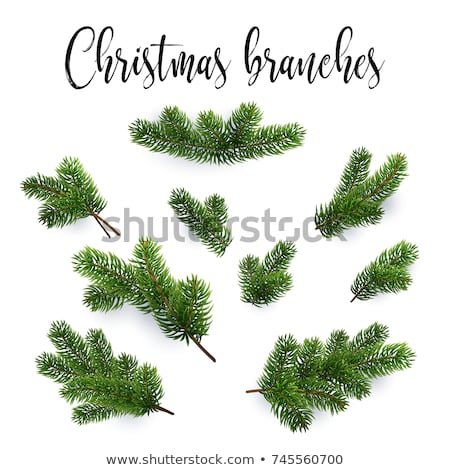 Kunst · Weihnachten · Dekoration · Tanne · Niederlassungen · weiß - stock foto © -baks-