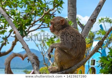 Сток-фото: Обезьяны · острове · иллюстрация · три · играет · пейзаж