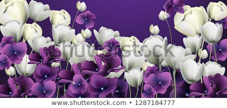 White flowers banner Vector. Duotone retro floral backgrounds stock photo © frimufilms