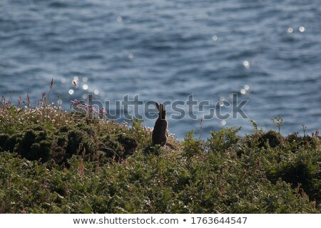 Lapin falaise illustration nature design lapin Photo stock © colematt