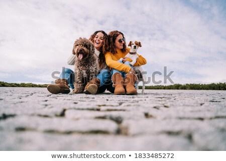 Boston · terrier · cão · sorrir · cabelo · retrato - foto stock © lopolo