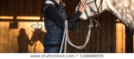 Retrato jóvenes mujer hermosa marrón caballo aire libre Foto stock © Lopolo