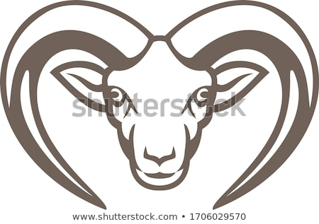 Armenian Mouflon Head Mascot Stock photo © patrimonio