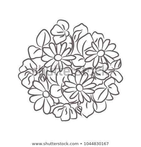 Chamomile floral rosette vector isolated composition. Stock photo © yopixart