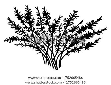 Preto silhueta arbusto sombra planta simples Foto stock © robuart