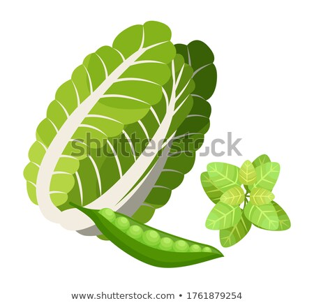 Isolated chinese cabbage, basil leaves, pea pod, natural organic vegetable and greenery for salad Stock photo © robuart