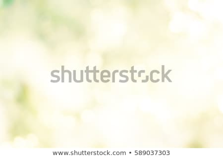 Bokeh vibrante verde luces luz Foto stock © stuartmiles