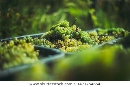 Vineyard detail Stock photo © prill