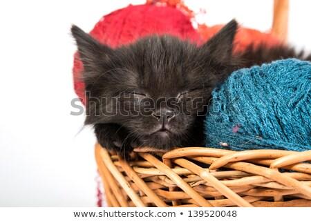 Сток-фото: черный · котенка · корзины · пряжи · Cute · ребенка