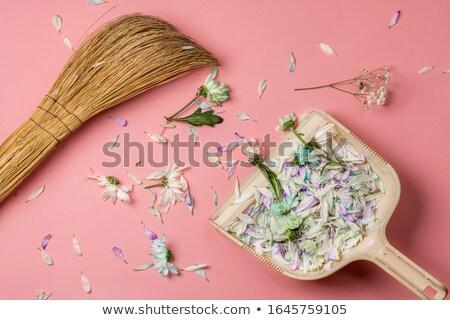 donna · raccogliere · pennello · stanco - foto d'archivio © hraska
