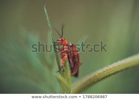 Vermelho besouro ilustração desenho animado beleza Foto stock © Genestro