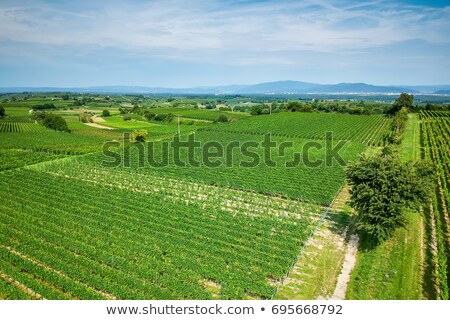 vineculture at Freiburg Germany Stock photo © magann
