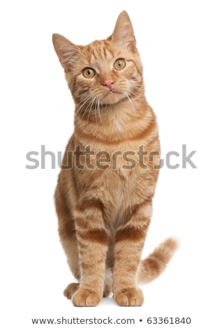 Ras kat vergadering naar Stockfoto © simazoran