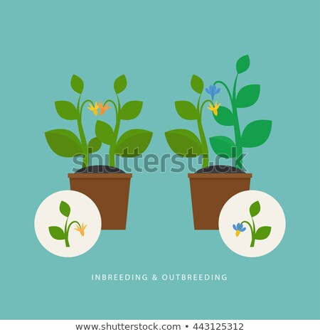 Background design with different types of flowers Stock photo © colematt