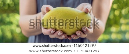 Mango in beautiful female hands on a green background BANNER, long format Stock photo © galitskaya