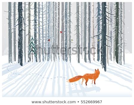 Tél képeslap róka erdő vektor áll Stock fotó © robuart
